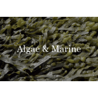 Algae and Marine